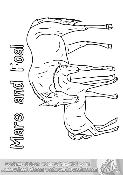 Coloring Pages Of Horses And Foals by Coloring Pages Of Horses And Foals Az Coloring Pages