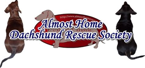 almost home rescue almost home dachshund rescue society