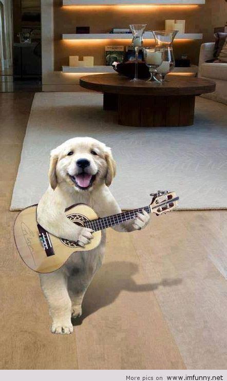 funny dog singing