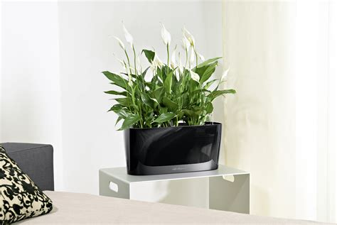 self watering planters plants take care of themselves with new lechuza self watering planters