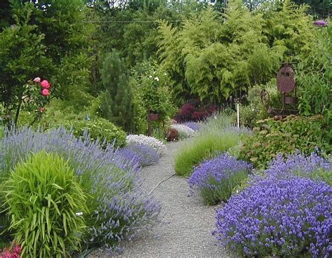 top 28 garden border shrubs mixed shrub border andy