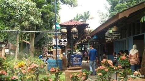 pasar satwa dan tanaman hias yogyakarta 1
