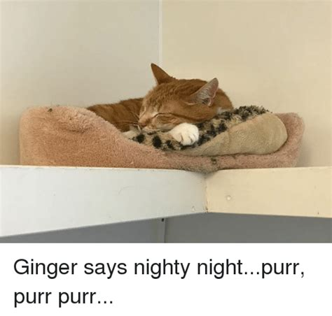 Nighty Night Meme - ginger says nighty nightpurr purr purr meme on sizzle
