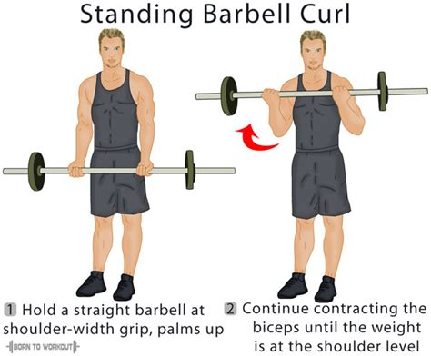 Barbel Curl standing barbell curl forms techniques tips and pictures