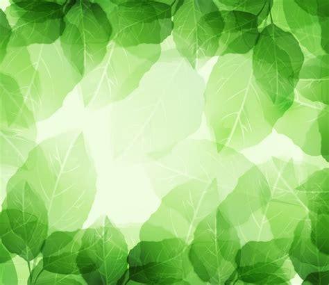 groene bladeren en transparanten op achtergrond vector