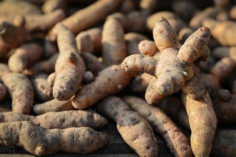 Alte Kartoffelsorten Kaufen 2298 by Blau Picklig Und Krumm Sch 246 Nheit Wird 252 Bersch 228 Tzt N Tv De