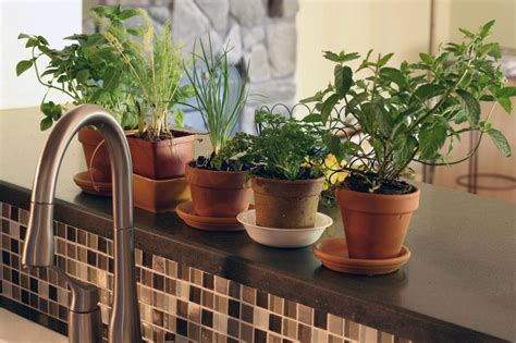 Indoor Windowsill Herb Garden by Organic Herbs Are A Smart Choice For The Home Herb Garden