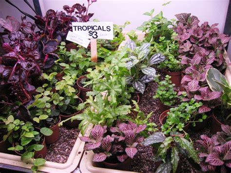 Low Light Tropical Plants - 2 inch terrarium plants the palm room