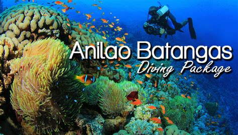dive package anilao batangas diving package