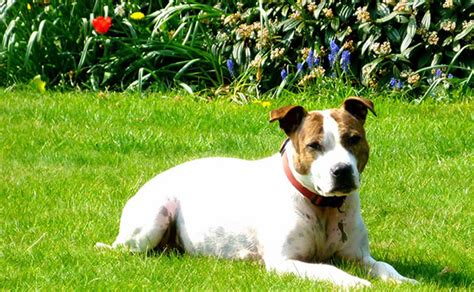 how to keep dogs lawn how to keep stray dogs your lawn