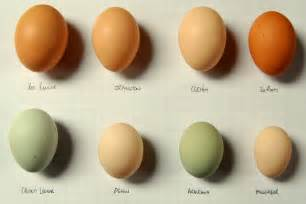 speckled sussex egg color chicken egg color pictures to pin on
