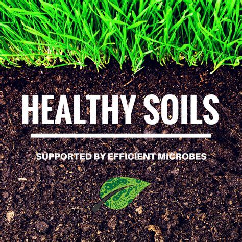 Detox Soil by Unlock The Potential Of Soil Efficient Microbes Pro Soil