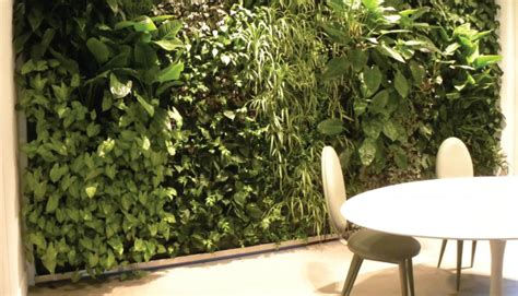 giardini in casa giardini verticali in casa fotogallery