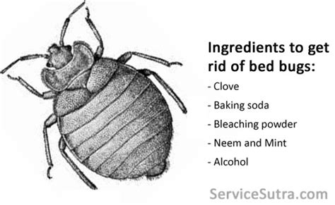 how easy is it to get bed bugs how can you get rid of bedbugs home safe