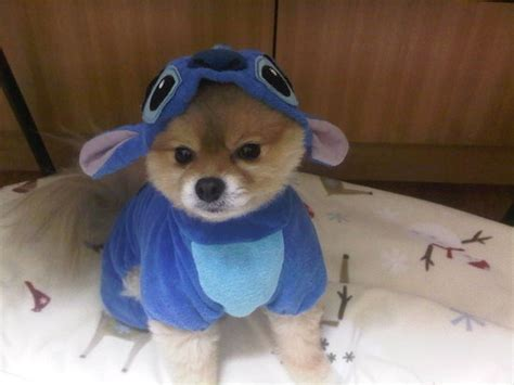 onesie for dogs stitch onesie sooooooooooooooo