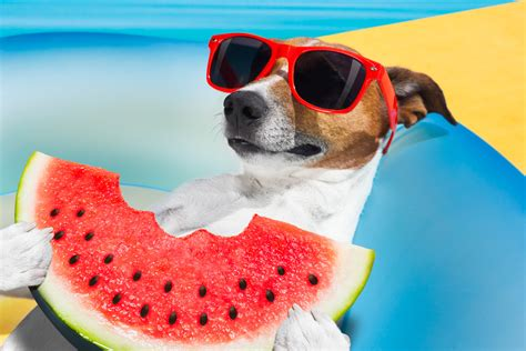 can puppies watermelon candogseatwatermelon commonpaw