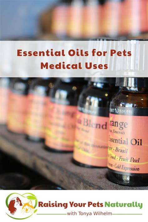 essential oils for skin allergies 348 best health and fitness pets images on