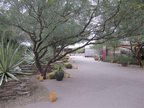 Desert Botanical Gardens Luminarias Desert Botanical Gardens Popular Destination This Tim