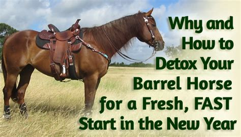 Detox Equine by Why And How To Detox Your Barrel For A Fresh Fast
