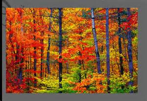 Cheap Flowers Delivery The Autumn Forest Colourful Trees Painting 34