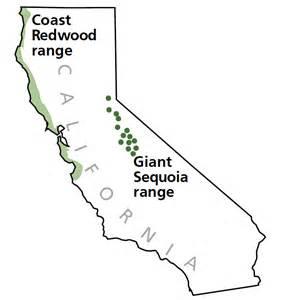 sequoia trees in california map redwoods or sequoias california forum tripadvisor