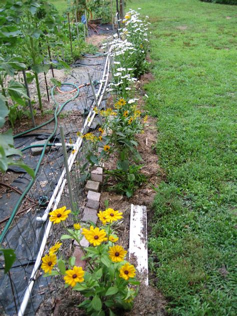 Vegetable Garden And Putting In A New Flower Bed Vegetable And Flower Garden