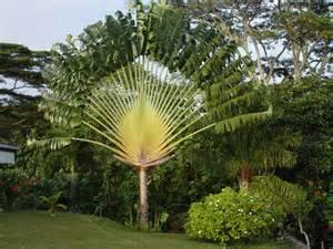 notre arbre celui des grand voyageurs grand arbre