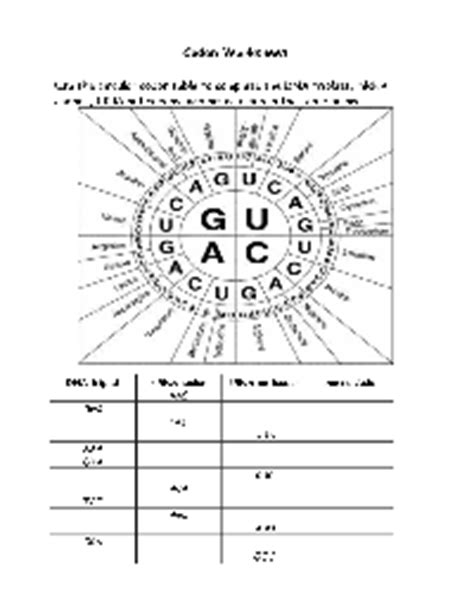 Codon Worksheet Answers by Other Worksheet Category Page 957 Worksheeto