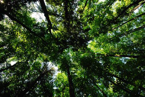 Canopy Definition Rainforest Ecuador Smashes World Record For Planting Most Trees In