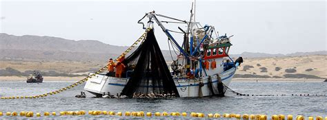 peru seafood fishing industry companies d j info peru fishmeal market on hold as anchovy quota news looms