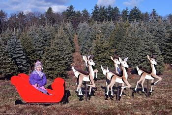 massachusetts christmas tree association mcta merrimac ma