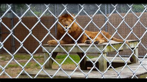 popcorn park zoo forked river nj animals  kids