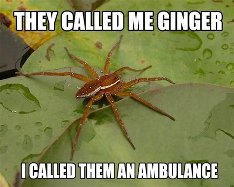 Spider Meme - 17 best images about spider memes on pinterest