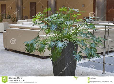 indoor decorative plant stock photo image 39847499
