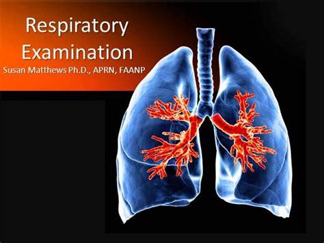 Respiratory Examination Authorstream Lung Ppt Templates Free