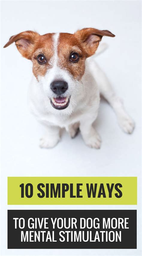 brain for dogs 1000 ideas about brain on brain teasers word puzzles and learning