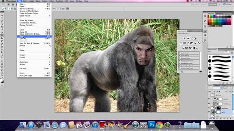 how to when to put your compositing how to put your on an animal