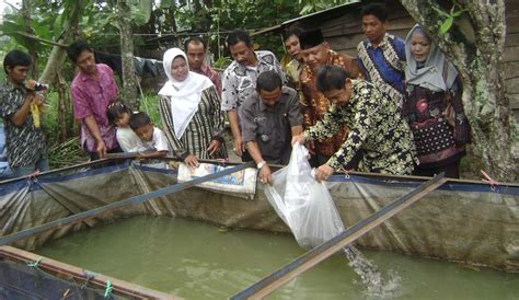 Bibit Ikan Lele Di Lung society
