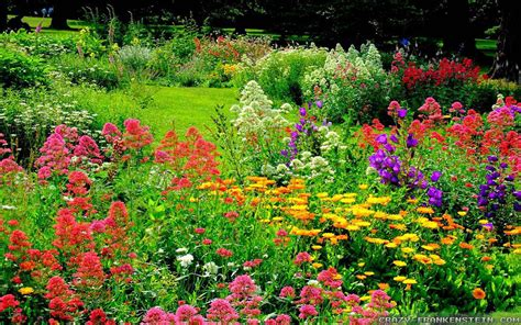 the wonderful world of flower gardens the lone in a crowd