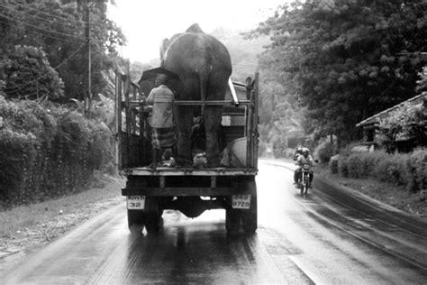 1325266736 des elephants et des hommes 169 jean francois mutzig conditions g 233 n 233 rales
