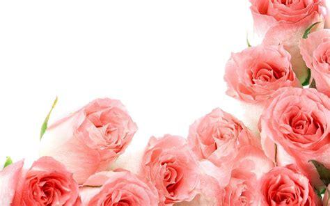 desktop themes roses roses wallpapers for desktop wallpaper cave