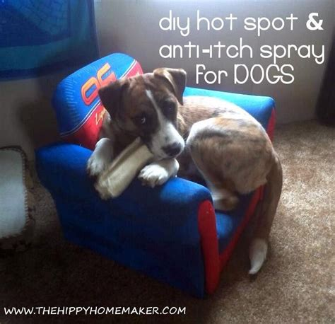 essential oils for itchy dogs 1000 images about dogs remedies on for dogs pets and sprays