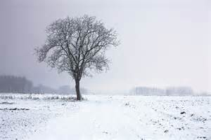 Winter Tree by Gallery For Gt Winter Tree Landscape