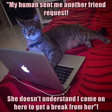 Cute Funny Cat Memes - the problem with teenage cats funny pet humor cute