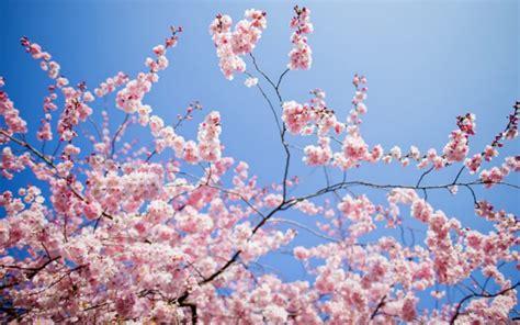 quali sono i fiori di primavera quali sono i fiori ci annunciano l arrivo della