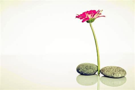 imagenes filosofia zen 187 filosof 237 a zen optimismo conciencia y equilibrio