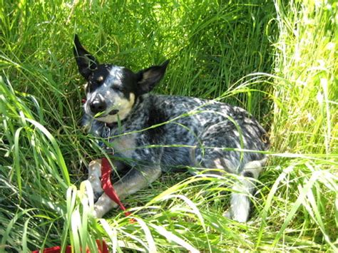 is it bad for dogs to eat grass 10 ways to grow grass and cut lawn care costs squawkfox