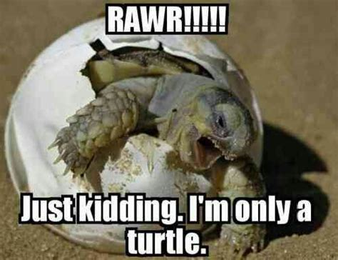 Meme Dinosaur - funny dinosaur memes www pixshark com images galleries