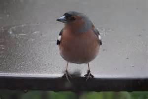 nature en ville 224 cergy pontoise oiseaux