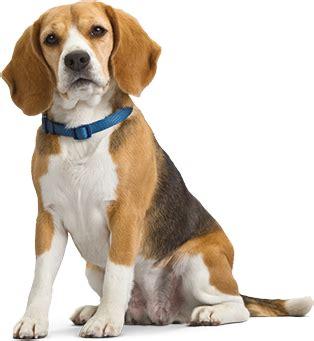 pet dogs images clinica veterinaria pet center